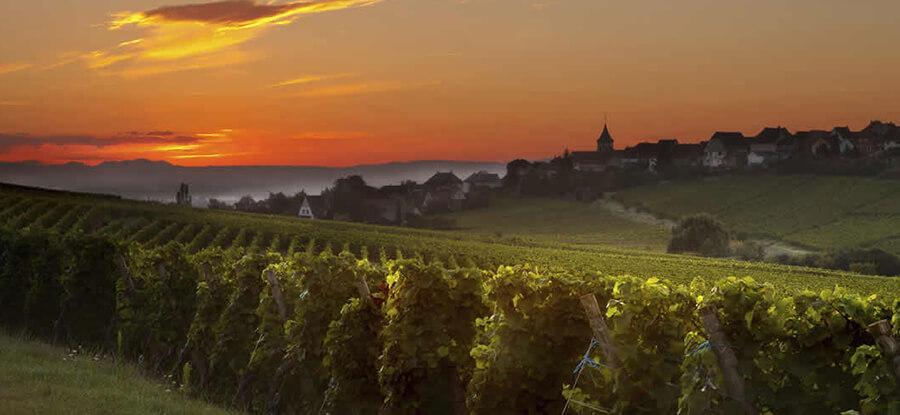 thema-wijnreizen-frankrijk3