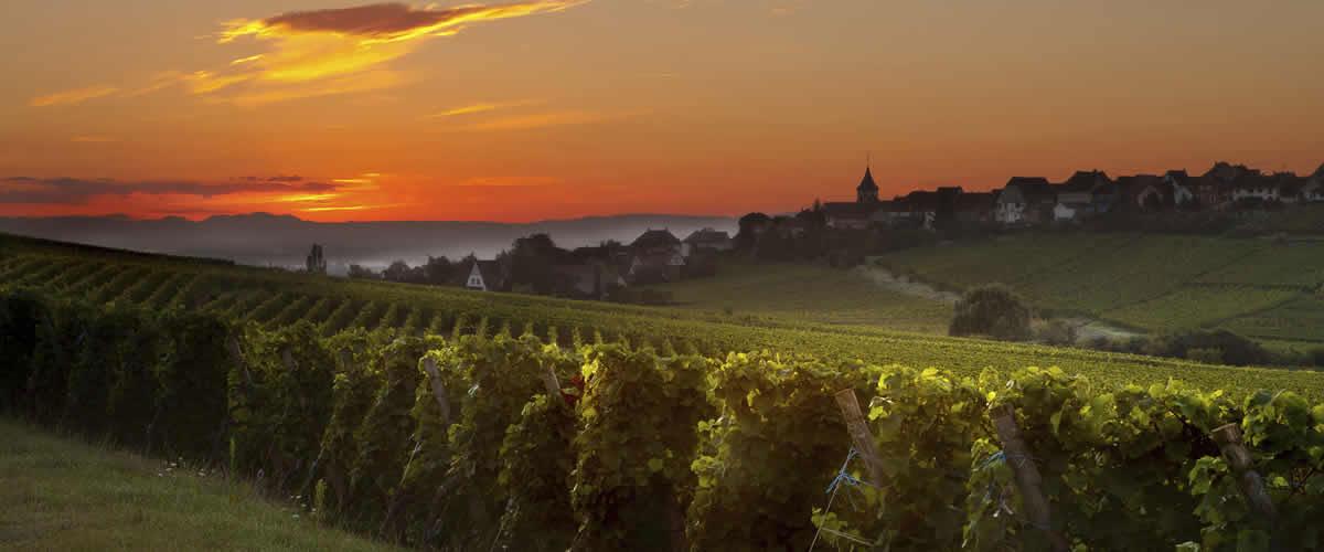 Wijnreizen in Frankrijk