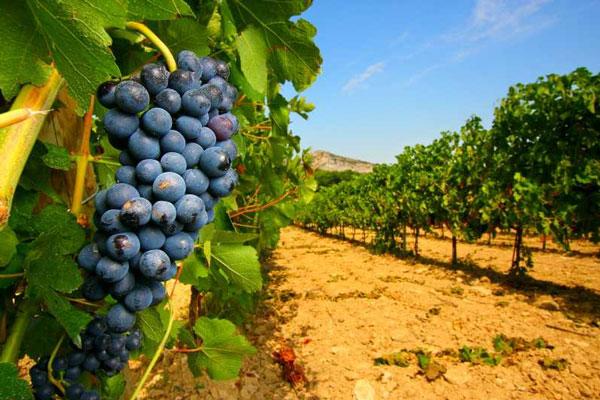 Activiteiten te doen Provence